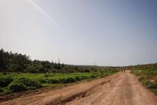 תל צפית - לטייל בעיר הולדתו של גוליית הפלישתי