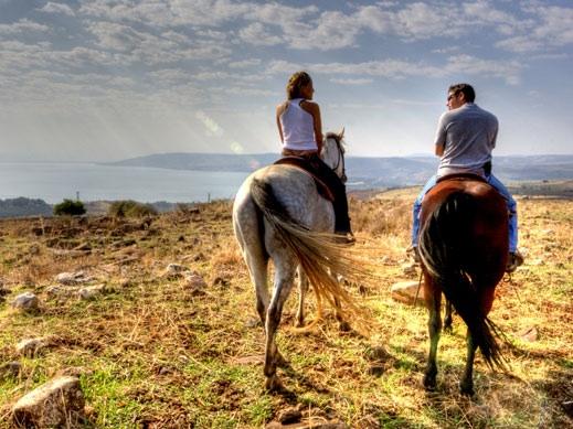 חוות סוסים ורד הגליל