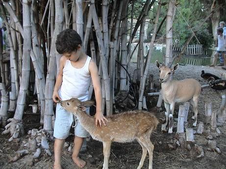 לגעת בחיות - ספארי לילדים