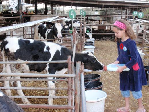 שביל פרות החלב