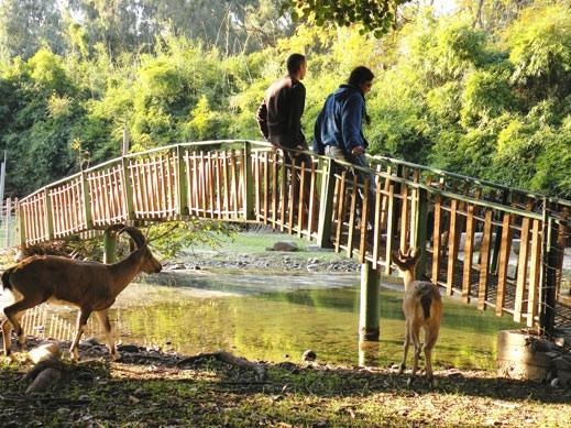 תוצאת תמונה עבור גן וחיות
