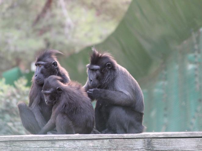 פארק הקופים ביער בן שמן