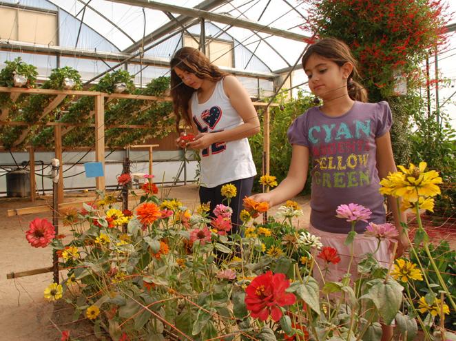 חלון לחקלאות בערבה - מרכז ויידור