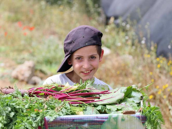 קטיף ירקות ועלים כפר הרואה