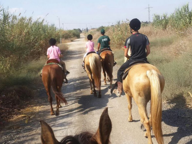 רוכבי חמד - חוות סוסים במרכז
