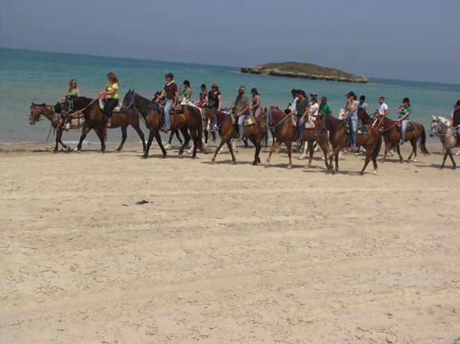 חוות סוסים דור-טיולים קסומים לאורך החוף