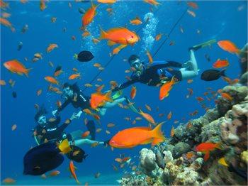 מועדון צלילה סנובה אילת
