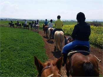 חוות גזית טיולי סוסים
