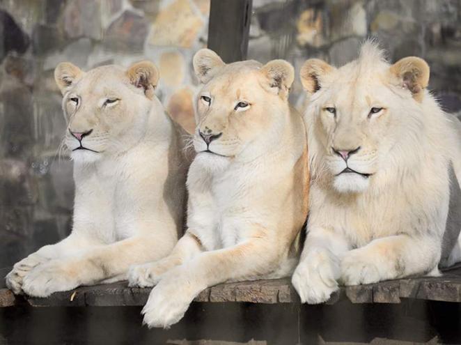 נגב ZOO - גן החיות הגדול בנגב