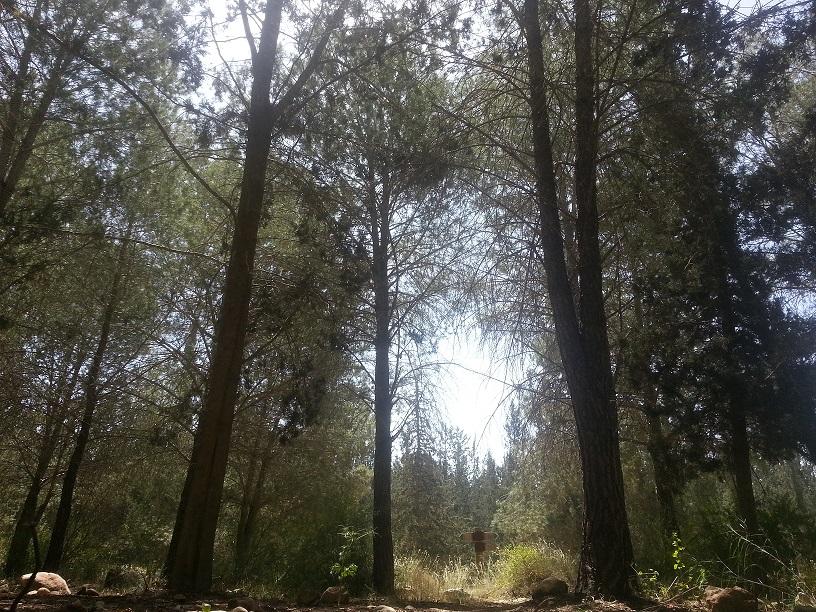יער להב - ריאה ירוקה בצפון הנגב