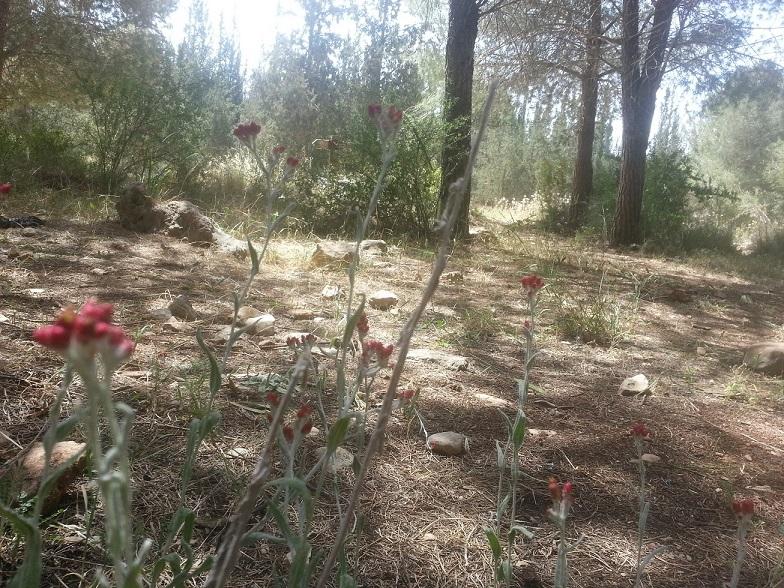 יער ראש העין ושביל פרחי הבר