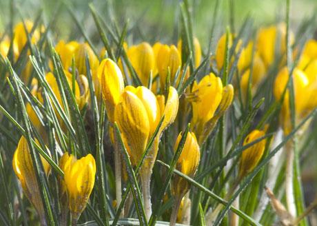 נחל מחניים תחתון - טיול פריחות צהוב