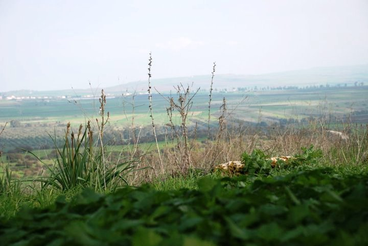 יער בית קשת - יער קסום עם חניונים ותצפיות