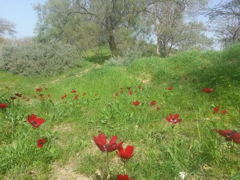 גן לאומי אשכול - פארק הבשור